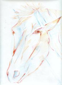 tekening paard averegten1